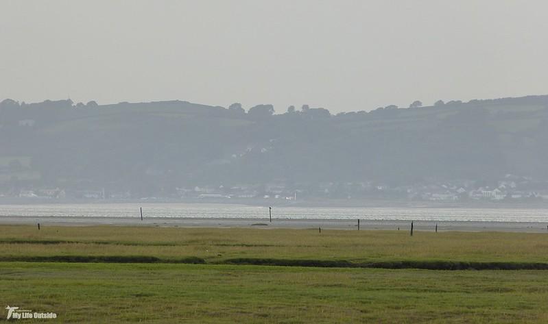 P1080673 - Osprey, Llanrhidian Marsh