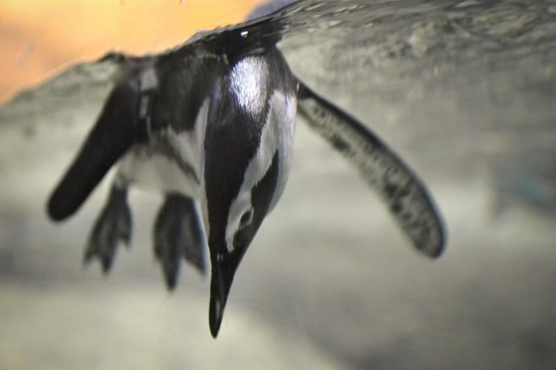 Penguin Play