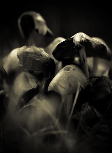 Mushroom Season // 02 09 14