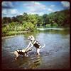Kuma gets stepped on by Farmer. #waterdogs @myurkovich2013