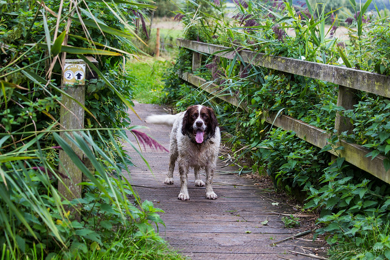 Max on the footbridge