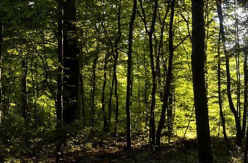 germany landscape nikon erfurt landschaft