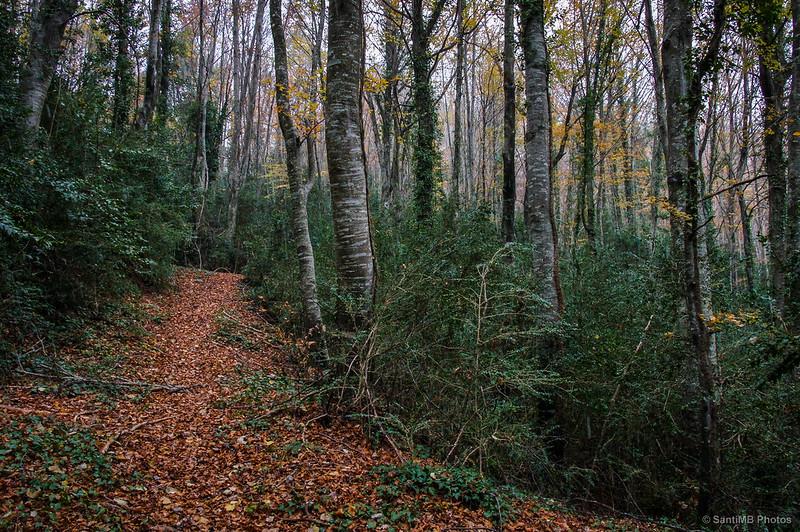 Perdidos en el bosque