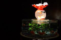 アートアクアリウム展 ~札幌・金魚の灯