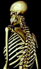 mythology(0.0), head(0.0), human body(0.0), skeleton(1.0), illustration(1.0), bone(1.0),