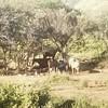Reunion a la sombra.... #caballos #garza #amaices #juangriego