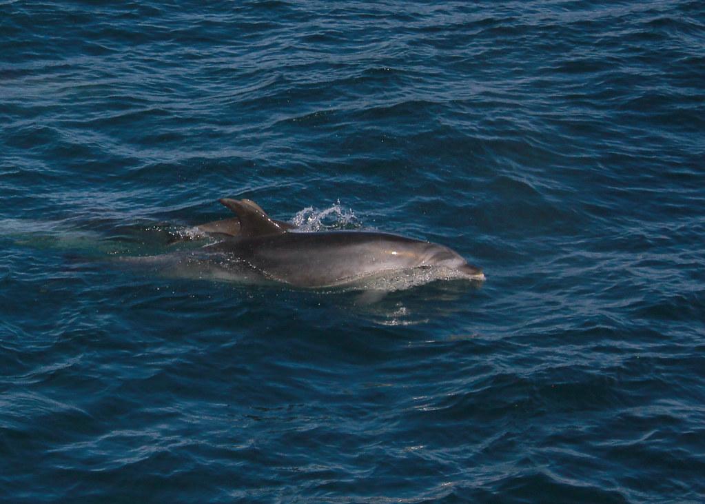 paihia-dolphin-new-zealand