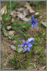 tiny March wildflowers