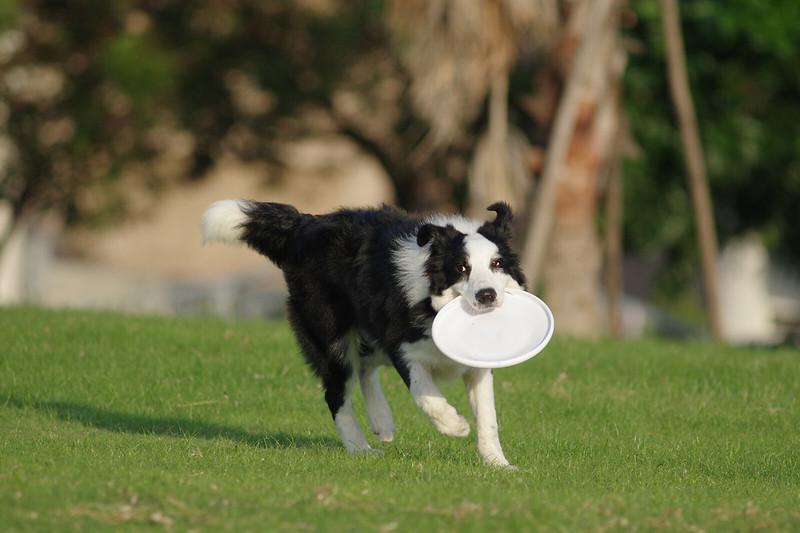 K3 + FA 400/5.6 -> 實戰寵物狗動態追焦測試