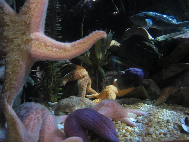 Star Fish tank
