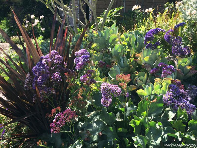 q_sea_lavender_web