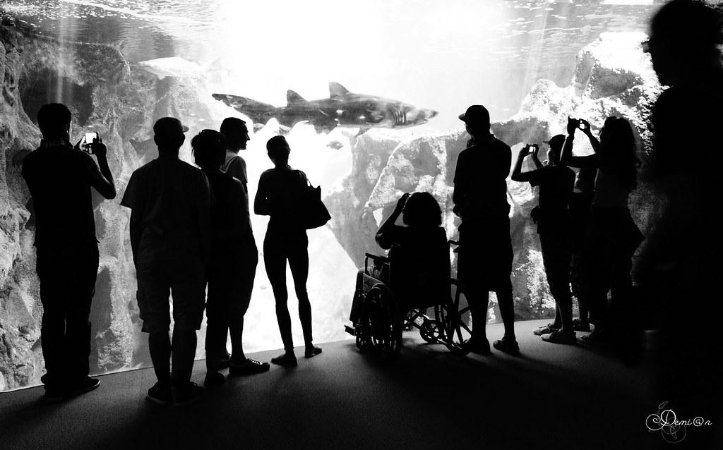 Les requins et les 'sharkphones' - #OurOcean (Notre Océan) - Flickr Friday -#OurOcean2014 Photo Challenge
