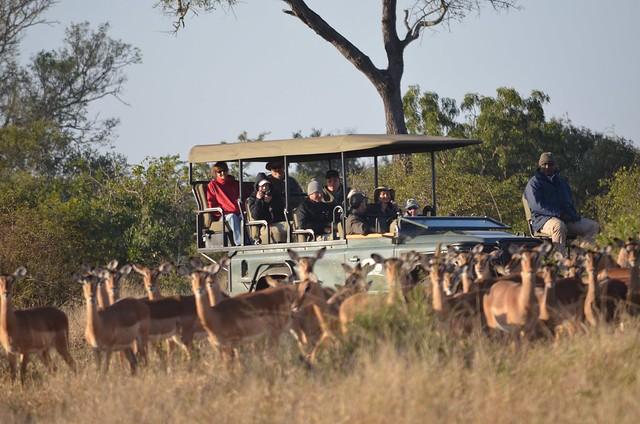 Best Safari Lodge South Africa