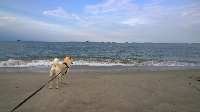 Kira watching the ocean
