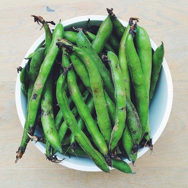 Ingredient of the week: broad beans. #raw #salad #vegetarian #vegan  #happydesksalad #desklunch #desk #rawfood #rawvegan #veg #veganfood #veganshare #cleaneat #eatclean #nutrition #nutritionist #notsdadesklunch #fit #fitness #instafood #instasalad #feel