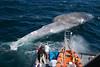 deadwhale