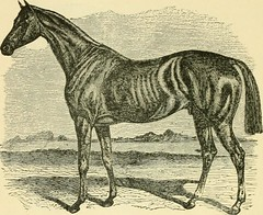 """Image from page 289 of """"The standard horse book, comprising the taming, controlling and education of unbroken and vicious horses"""" (1895)"""