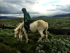 Riders in the storm (Day 4 Thingvellir @Eldhestar)