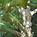 Plane tree in Limousin ©Matt From London
