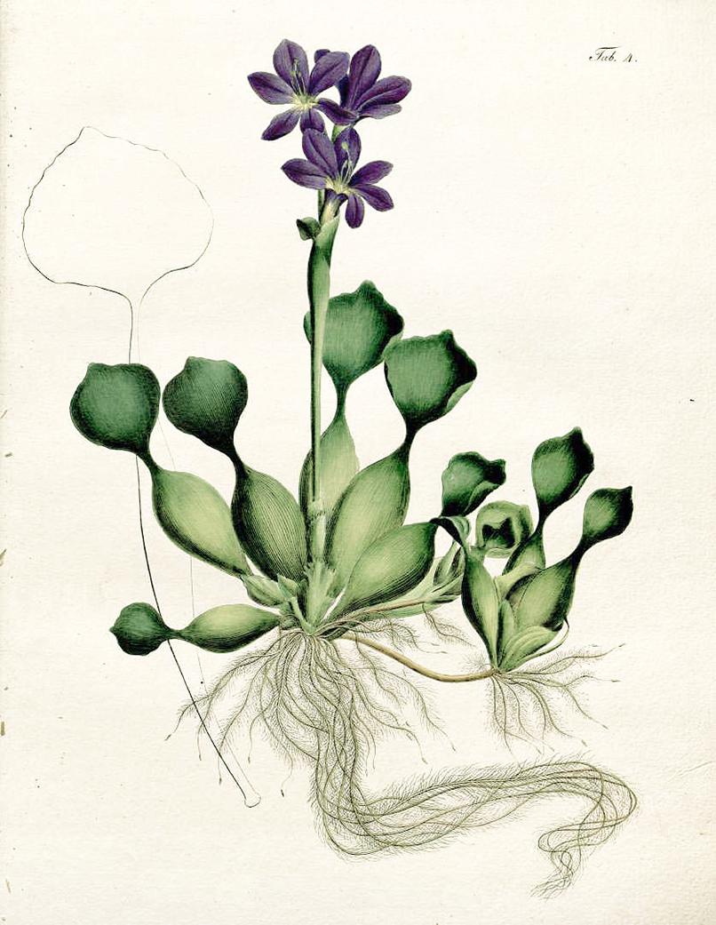 hyacinth candle 2