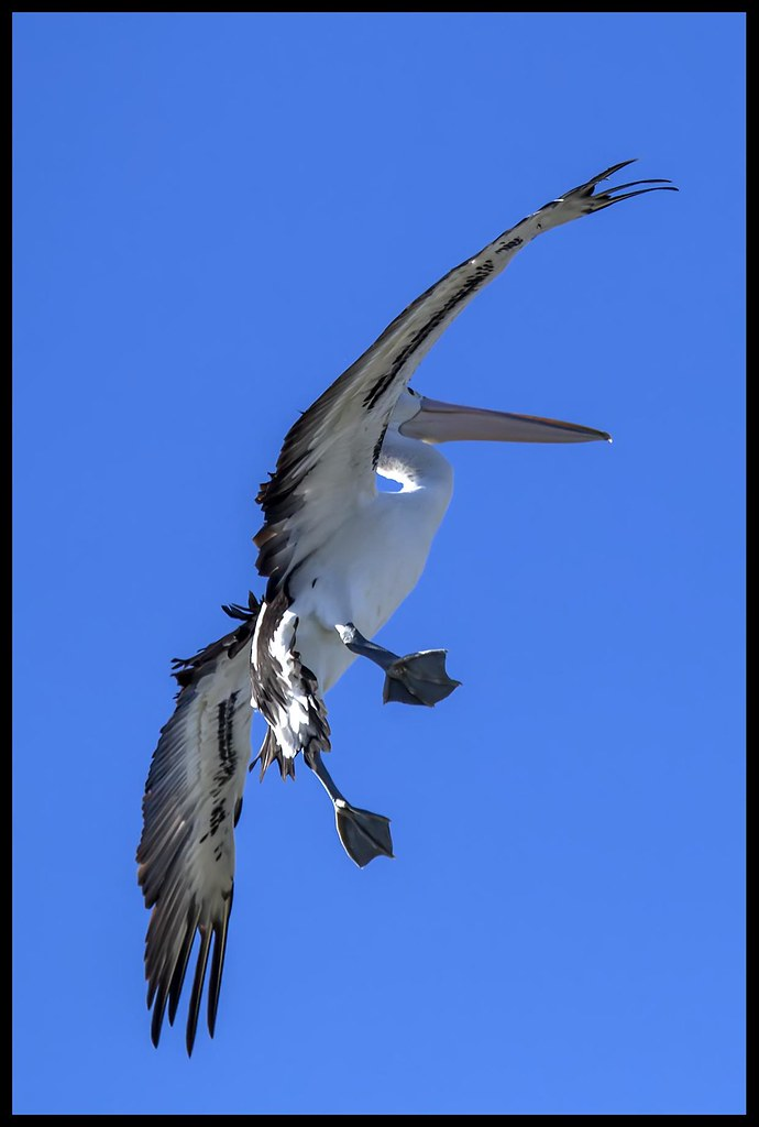 Pelican with speed brakes on-1=