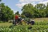 gardening 2014 by tshiverd