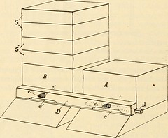 """Image from page 129 of """"The honey bee: a manual of instruction in apiculture"""" (1899)"""