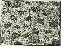 "Image from page 91 of ""Human physiology"" (1856)"