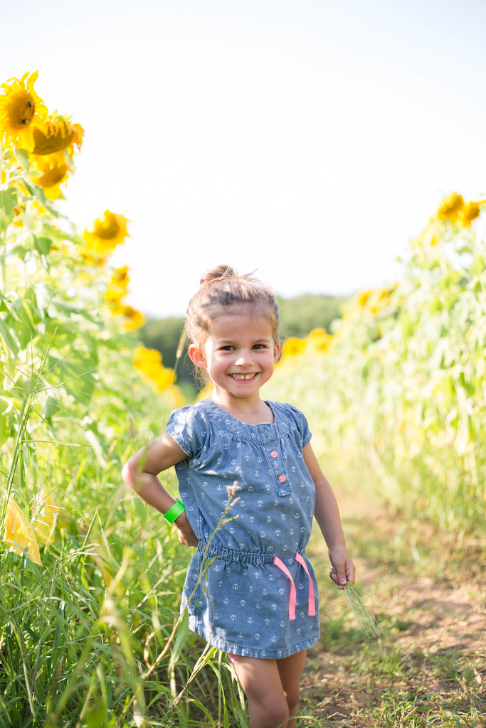 2014-08-08 Sunflower maze-055.jpg