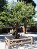 Photo:射水神社|Imizu Shrine By izunavi