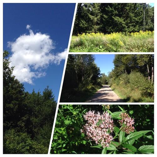 Wanderung Grünwalder Forst