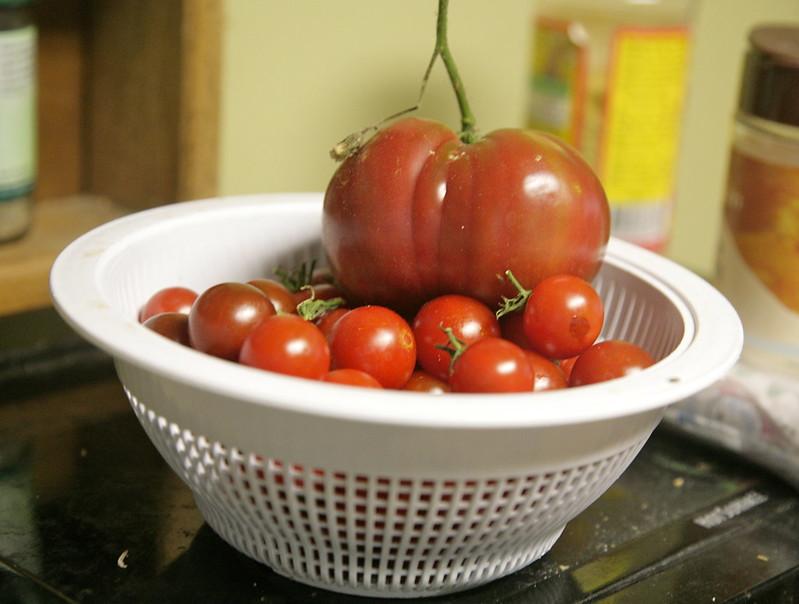 Late summer tomato overload