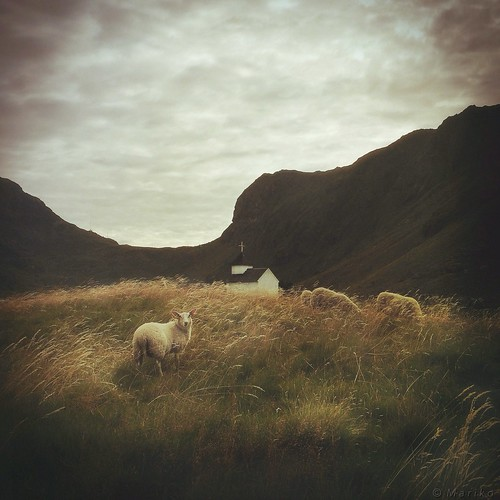 The Sheep And Their Chapel