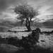 Cairngorm moor by michael prince