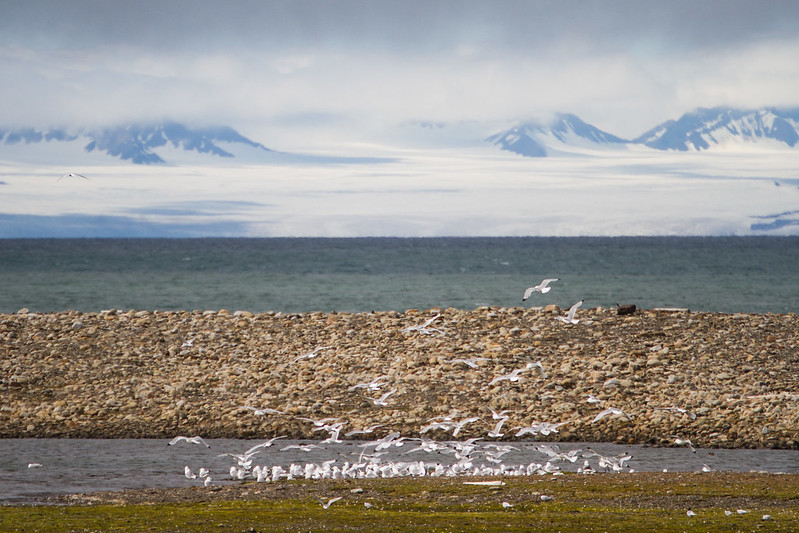 RelaxedPace01169_Svalbard7D5490
