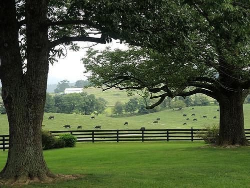 ranch virginia cow farm va gps bb geotag hume marriottranch sonygpscs3ka