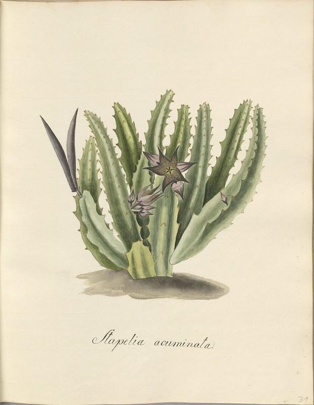 botany book prep drawing