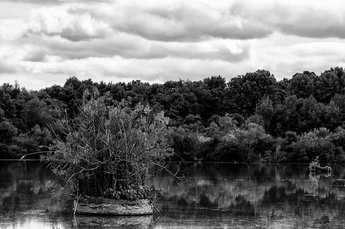 trees blackandwhite water pond cloudy colorefex niksoftware silverefex tamron70300vc heisteinpond