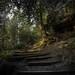 letztens im Märchenwald
