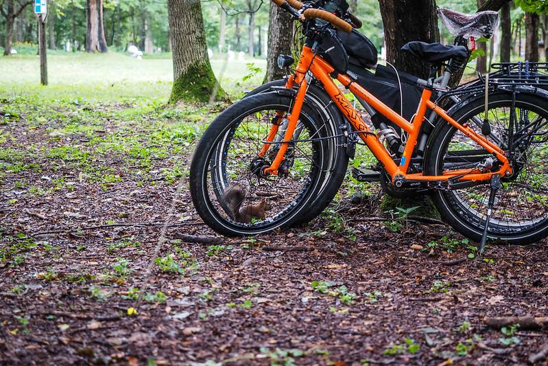 A squirrel scampering between our bicycle wheels at the Arashimaya Campground (Memuro, Hokkaido, Japan)