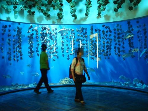 國立海洋生物博物館10