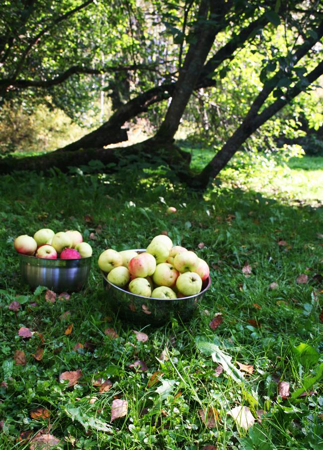 Omenapuilla8