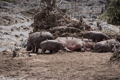 Selous Tanzania-4.jpg