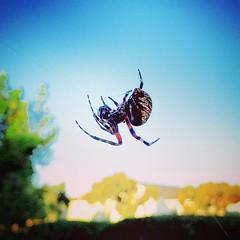 Good morning Mr. Spider. Catch any good snacks last night?