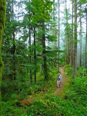 Ascending Big Tree Ridge