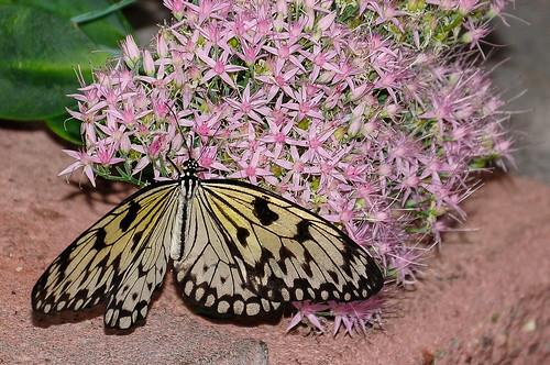 canada nature butterflies reidville newfoundlandandlabrador