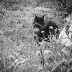 The cat of the forest... #cat #friends #cats #catsofinstagram #forest #neverstopexploring #norway #image #nikon #blackandwhite #black #white #followme #follow4follow #followforfollow #grass #flowers #flower #beautiful #peace #picture #photo #photography #