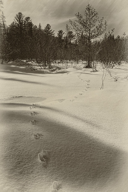 Fresh Snow Journey