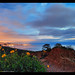 Spring Wildflowers at Broken Hill under a Twilight Sky
