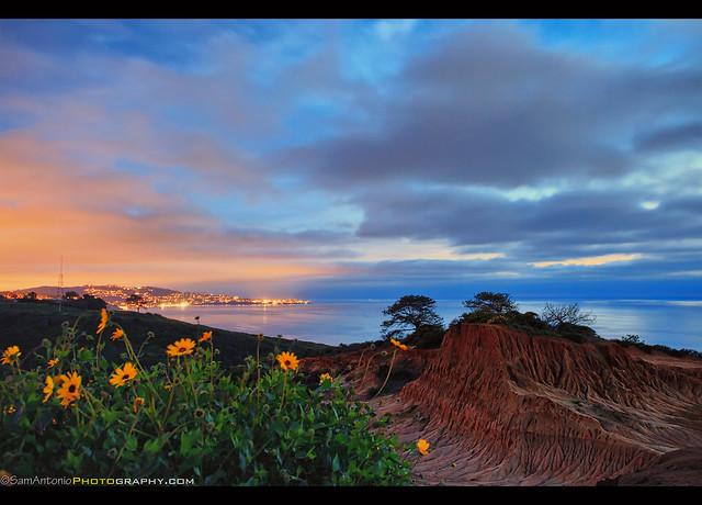 Spring Wildflowers at Broken Hill under a Twilight Sky